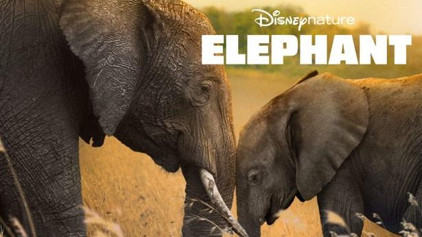Elephant Os filmes originais Disney+ classificados do pior ao melhor