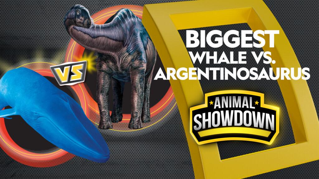 AnimalShowdown-Guia-Disney-Plus-Brasil-1024x576 Disney+: lançamentos de filmes e séries da semana