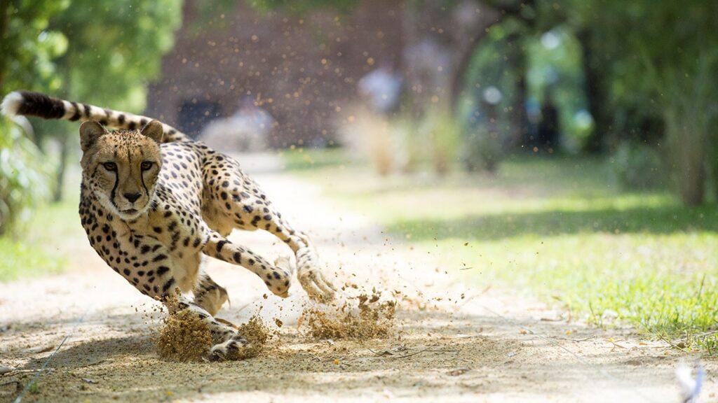 Big-Cat-Games-Guia-Disney-Plus-Brasil-1024x576 Disney+: lançamentos de filmes e séries da semana