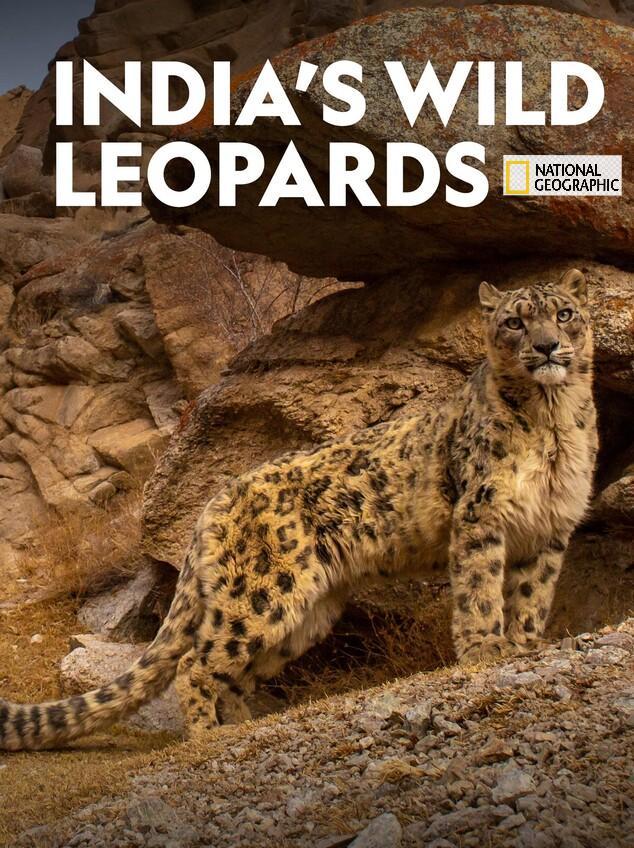 Indians-Wild-Leopards-Guia-Disney-Plus-Brasil Disney+: lançamentos de filmes e séries da semana