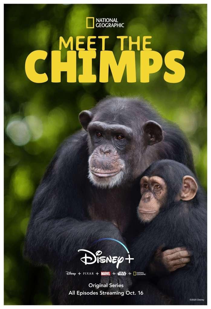 """Meet-the-Chimps NatGeo lança trailer de """"A vida secreta dos Chimpanzés"""" para o Disney+"""