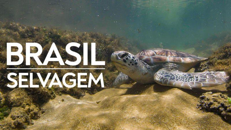 Brasil-Selvagem-Disney-Plus Conheça em detalhes os Lançamentos da 1ª Semana de Junho no Disney+