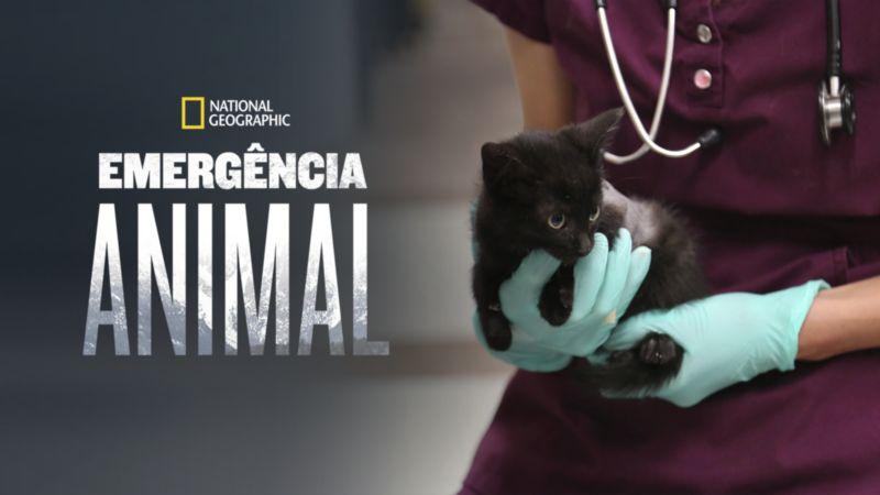 Emergencia-Animal-Disney-Plus Novidades da semana no Disney+ incluem a grande estreia da série Loki
